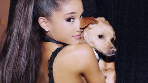 Ariana Grande mit ihrem Hund Toulouse