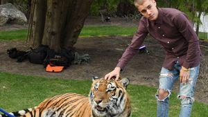 Justin Bieber und ein Tiger
