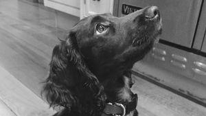 Olive Beckham ist der neue Hund der Beckhams