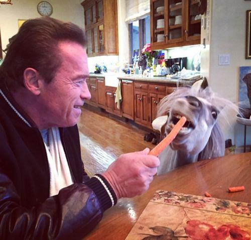 Arnold Schwarzenegger hat ein Frühstücks-Date mit seinem Pferd