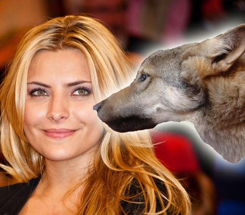 Sophia Thomalla wurde von einem Wolfshund gebissen