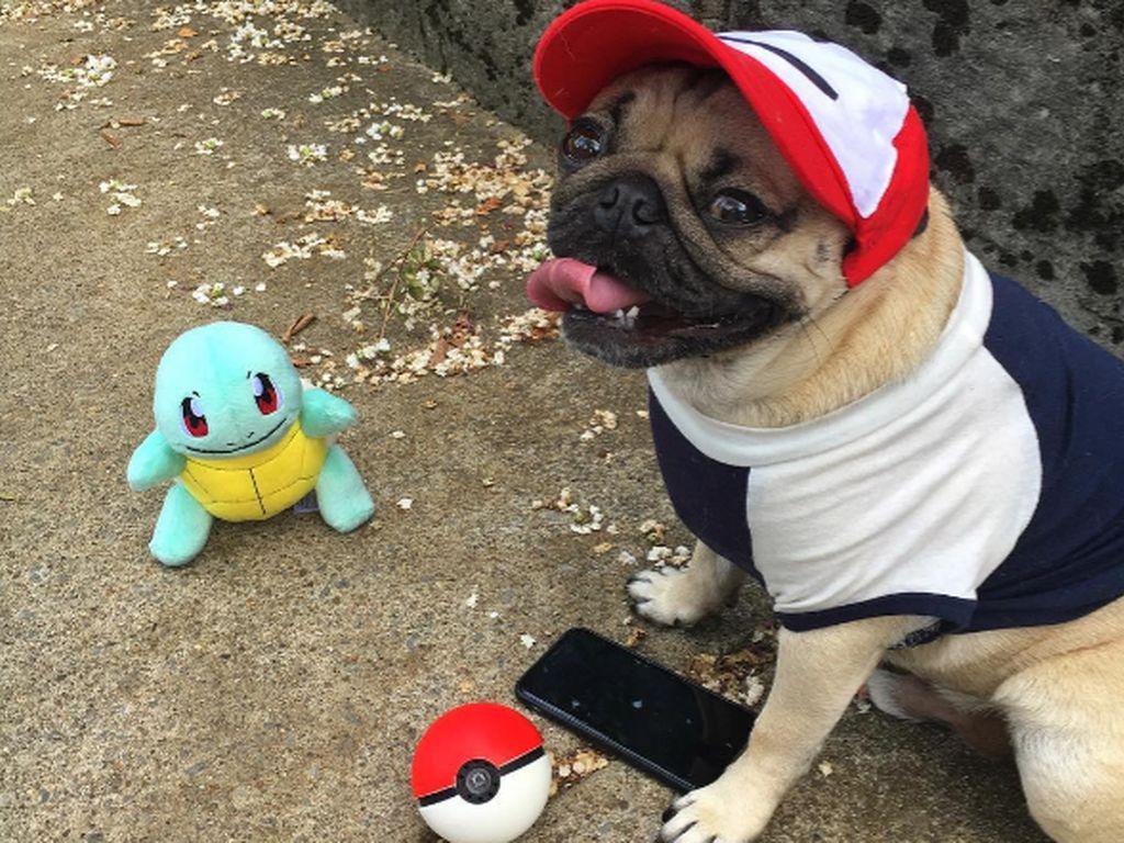 """Mops """"Doug The Pug"""", Instagram-Star"""