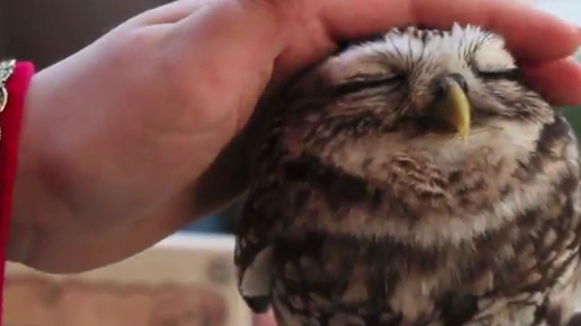 brüste streicheln owl transen