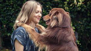 Amanda Seyfried: Sie liebt ihren Hund genauso wie ihr Kind
