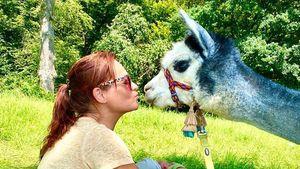 Niedlicher Alpaka-Nachwuchs bei Schlagerqueen Andrea Berg