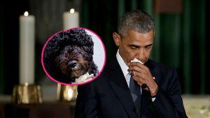 """""""Wahrer Freund"""": Barack Obamas Hund Bo stirbt mit 12 Jahren"""
