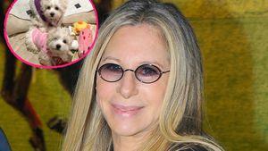 Barbara Streisand: Sie klont 2x ihren verstorbenen Hund!