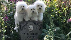 Am Grab des Ur-Pudels: Barbra Streisand zeigt geklonte Hunde