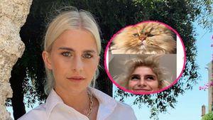 Follower finden: Caro Daur sieht morgens aus wie diese Katze