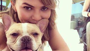 Tief getroffen: Chrissy Teigen trauert um Bulldogge Pippa