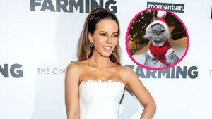 Grumpy Cat? Kate Beckinsales Katze nicht in Weihnachtslaune!