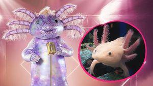 """""""The Masked Singer""""-Fans wundern sich: Was ist ein Axolotl?"""