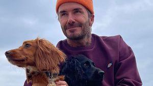 Endlich vereint: David Beckham ist wieder bei seinen Hunden