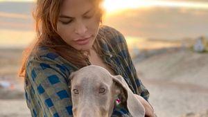Verschmust: Ryan Gosling & Eva Mendes zeigen neuen Hund