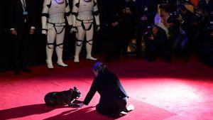 """""""Star Wars""""-Heros: Berührende Abschiedworte an Carrie Fisher"""