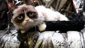 GoT-Schock: Grumpy Cat herrscht über Westeros
