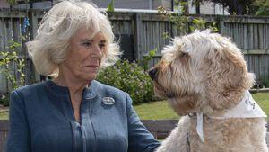 Na hoppla: Camilla und dieser Hund haben die gleiche Frisur!
