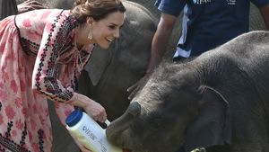Herzogin Kate hat Spaß bei Elefanten-Fütterung