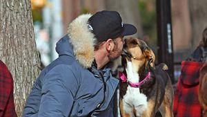 Er geht Woodrow fremd! Liev Schreiber küsst anderen Hund