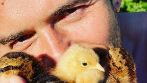 Zum Dahinschmelzen: Hier posiert Orlando Bloom mit Küken!