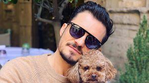 Nach tagelanger Suche: Orlando Blooms Hund Mighty ist tot