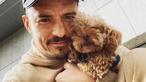 Orlando Bloom verzweifelt: Sein Hund Mighty wird vermisst!