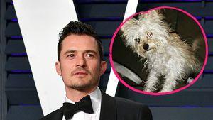Nach Gerüchten: Orlando Bloom hat wirklich einen neuen Hund