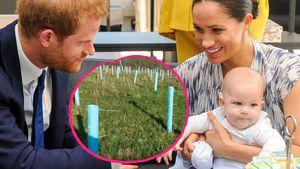 """""""Archie-Wald"""": Fans von Harry und Meghan pflanzen 530 Bäume"""