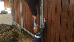 Prinz Nicolas von Schweden mit einem Pferd