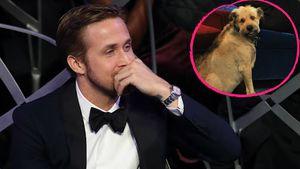 Herzbewegend: So sehr trauert Ryan Gosling um seinen Hund