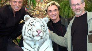 Traurig! Magier Roys Unfall-Tiger ist gestorben