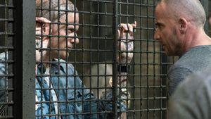 "Bestätigt? Knast-Serie ""Prison Break"" bekommt 6. Staffel"
