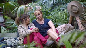 Pipi-Desaster im Dschungel: Welcher Camper pinkelt daneben?