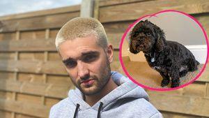Nach Unfall: Tom Parkers Hund musste Bein amputiert werden