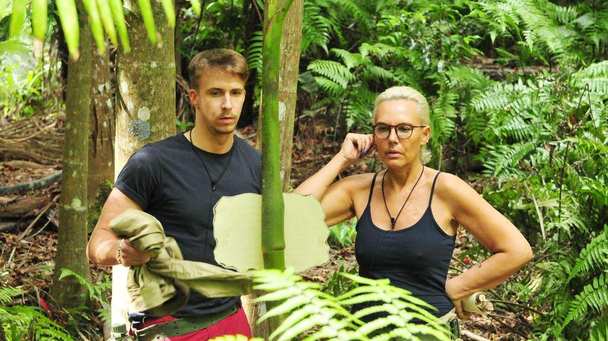Quoten fallen weiter: Ist das Dschungelcamp zu langweilig?