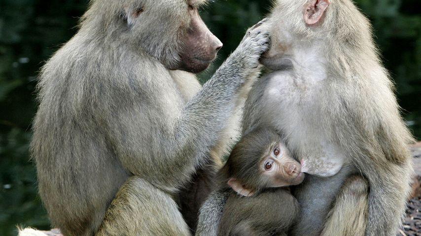 Tierischer Sex-Skandal: Zoo-TV schockt Zuschauer!
