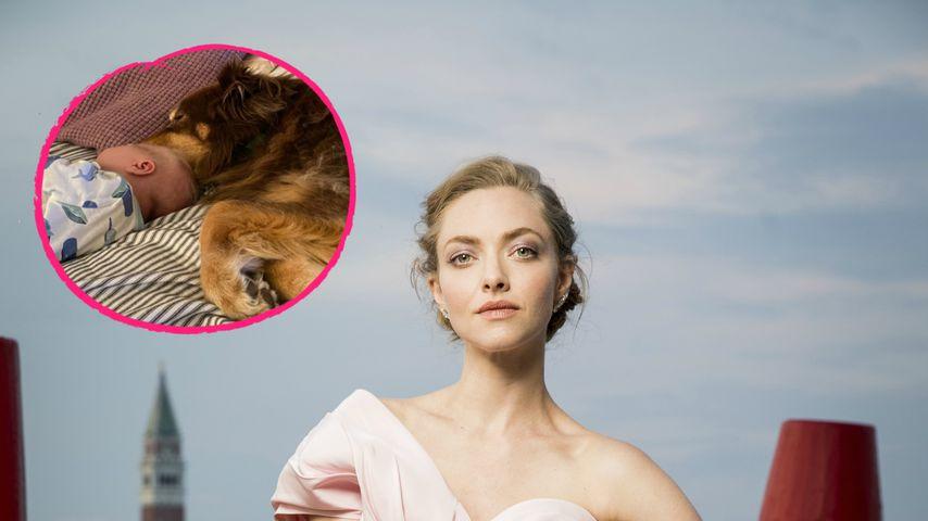 Wie süß! Amanda Seyfrieds Baby schlummert neben ihrem Hund