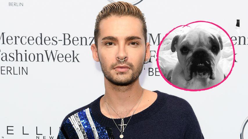 Tokio Hotel: Sänger Bill Kaulitz trauert um seinen Hund Pumba