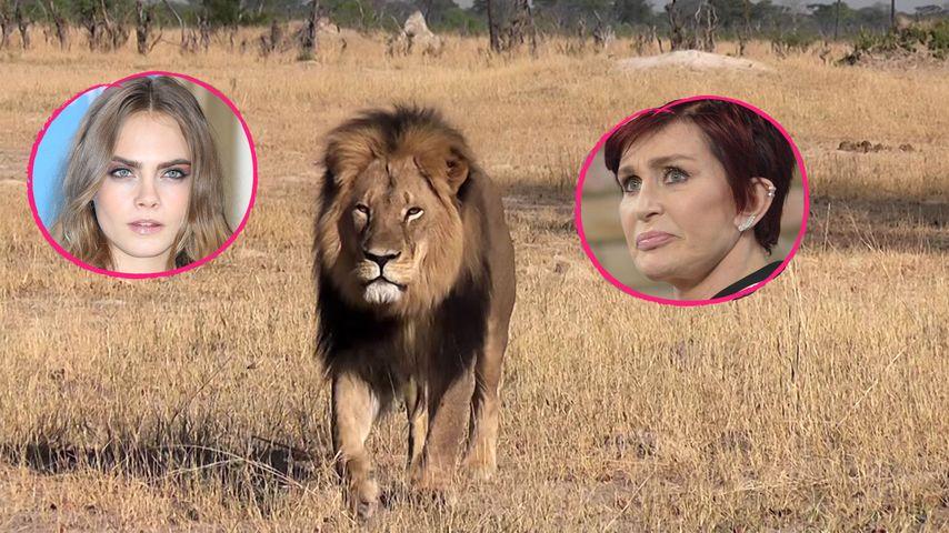 Löwe Cecil ermordet: Sharon Osbourne & Co. sind stinksauer!