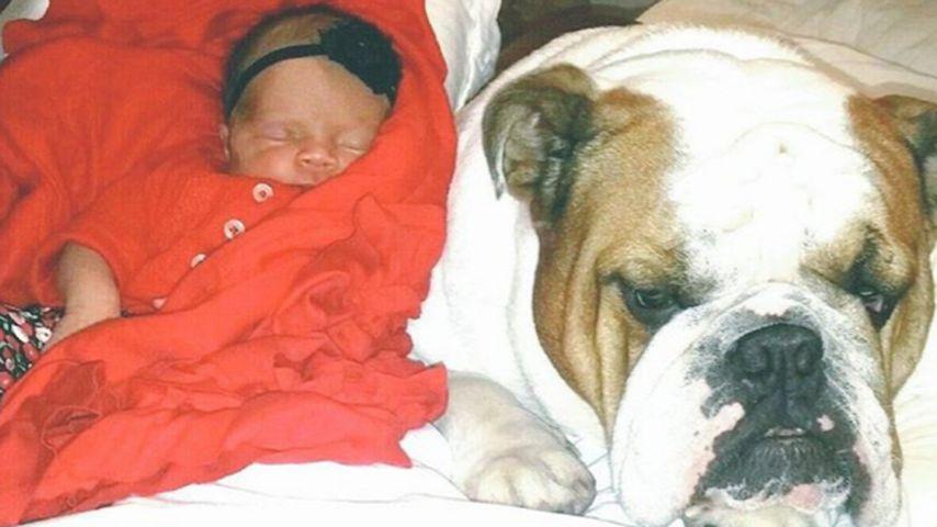 Kuschelstunde: Chanel Nicole chillt mit Bulldogge Max