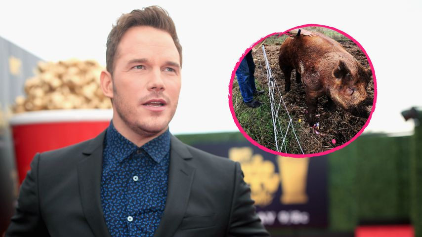 Chris Pratt in Trauer: Hausschwein Magnus ist verstorben!