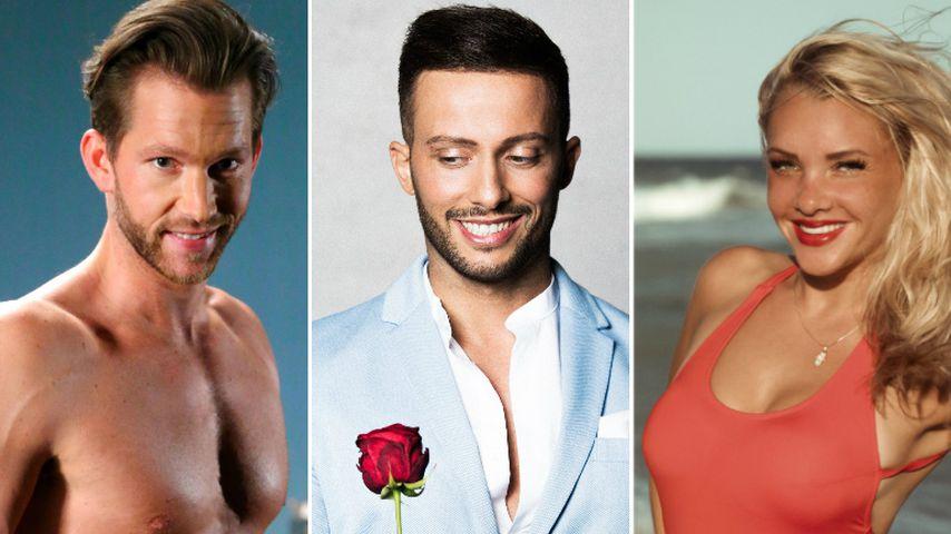 """""""Bachelor in Paradise"""": Belegschaft kommt bei Fans total an!"""