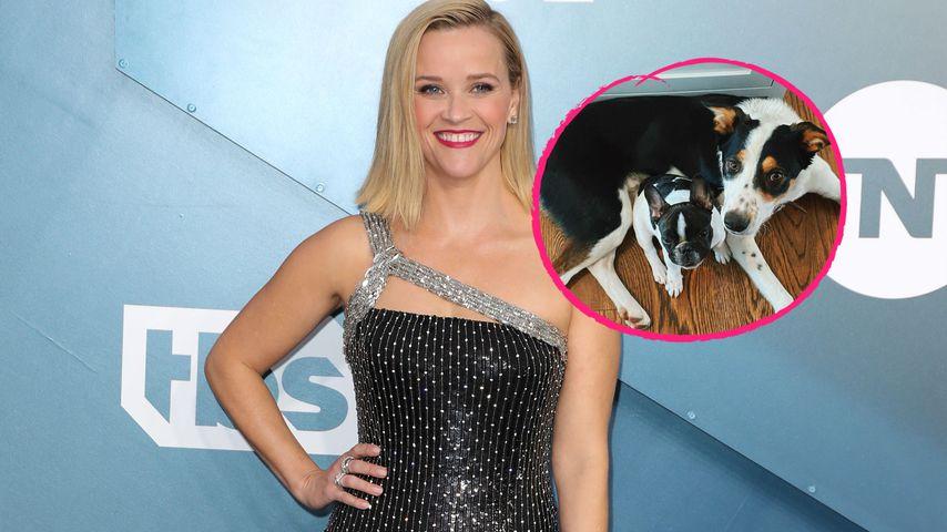 Reese Witherspoon stellt tierischen Familienzuwachs vor!