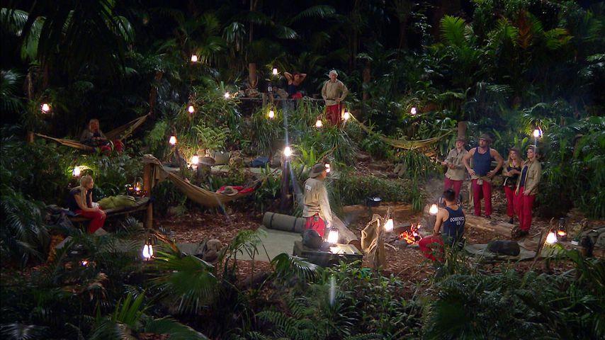 Dschungel-Fans rätseln: Für wen wurde Todesanzeige gezeigt?