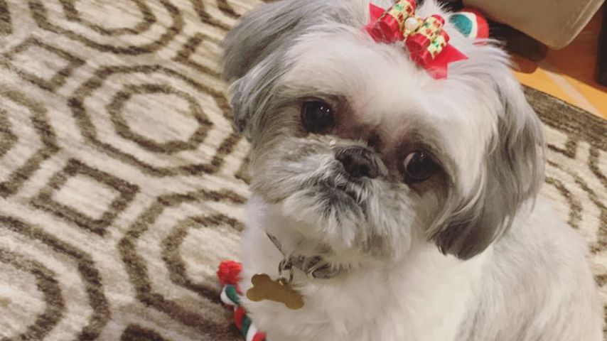 Demi Lovatos Hund Bella an Weihnachten 2018