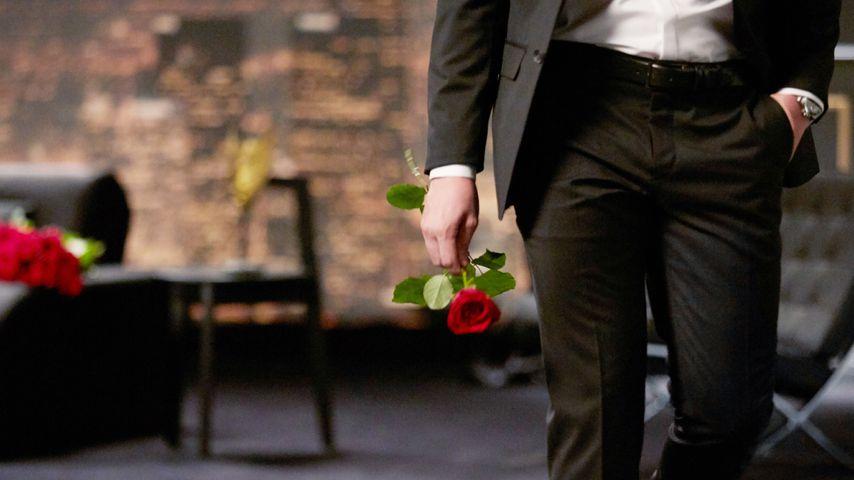 """""""Der Bachelor"""""""