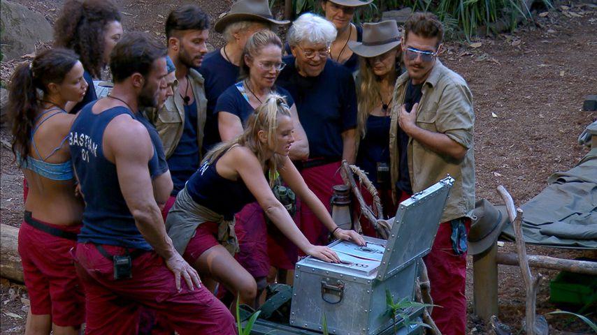 Nach Domenicos Exit: Wer gewinnt das Dschungelcamp 2019?