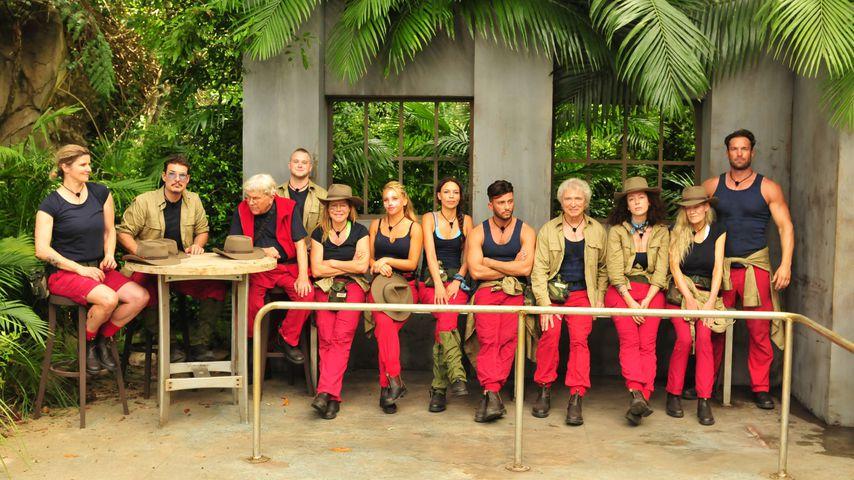 Nach erstem Dschungel-Tag: Wer ist jetzt euer Favorit?
