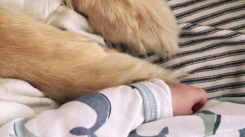 Amanda Seyfrieds Baby und ihr Hund im Oktober 2020