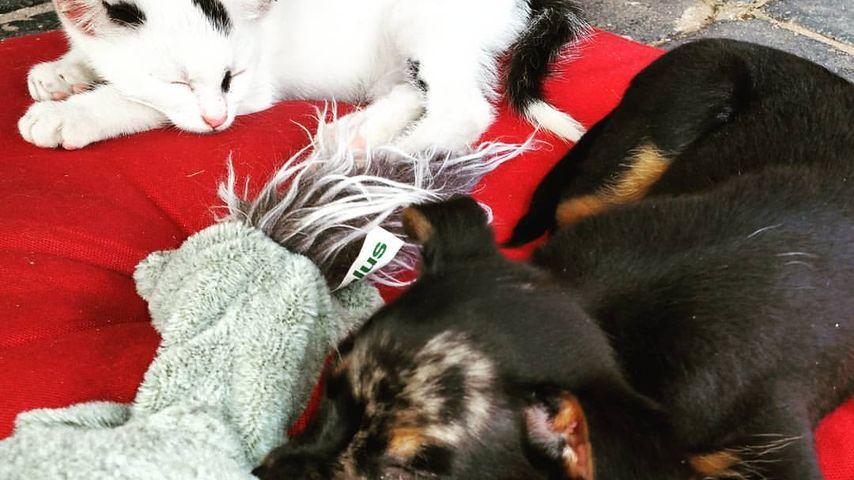 """Die """"Kinder"""" von Nico Schwanz & Saskia Atzerodt: Katze Mausi & Hund Batman"""